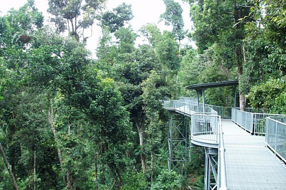 & Mission Beach Tours u2022 Mamu Rainforest Canopy Walkway u2022